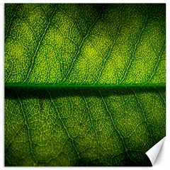 Leaf Nature Green The Leaves Canvas 20  X 20