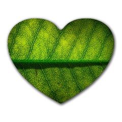 Leaf Nature Green The Leaves Heart Mousepads by Nexatart