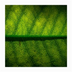 Leaf Nature Green The Leaves Medium Glasses Cloth