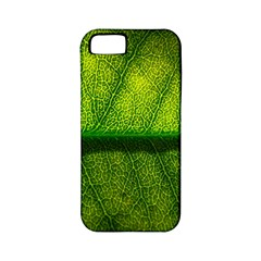 Leaf Nature Green The Leaves Apple Iphone 5 Classic Hardshell Case (pc+silicone) by Nexatart