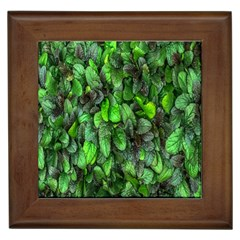 The Leaves Plants Hwalyeob Nature Framed Tiles