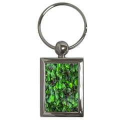 The Leaves Plants Hwalyeob Nature Key Chains (rectangle)  by Nexatart