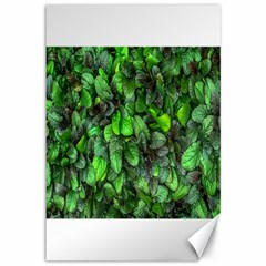 The Leaves Plants Hwalyeob Nature Canvas 12  X 18   by Nexatart