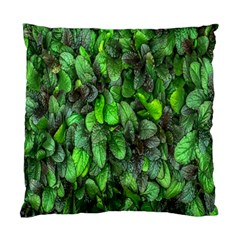 The Leaves Plants Hwalyeob Nature Standard Cushion Case (two Sides)