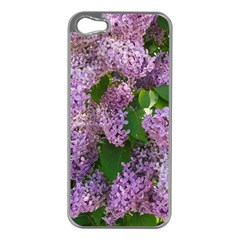 Lilacs 2 Apple Iphone 5 Case (silver) by dawnsiegler