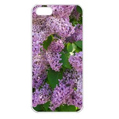 Lilacs 2 Apple Iphone 5 Seamless Case (white) by dawnsiegler