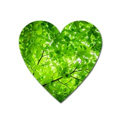 Green Wood The Leaves Twig Leaf Texture Heart Magnet