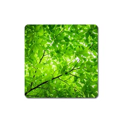 Green Wood The Leaves Twig Leaf Texture Square Magnet