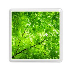 Green Wood The Leaves Twig Leaf Texture Memory Card Reader (square)  by Nexatart