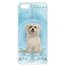 Cute Little Havanese Puppy Apple Iphone 5 Seamless Case (white) by FantasyWorld7