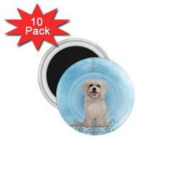 Cute Little Havanese Puppy 1 75  Magnets (10 Pack)  by FantasyWorld7
