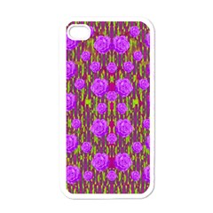 Roses Dancing On A Tulip Field Of Festive Colors Apple Iphone 4 Case (white) by pepitasart