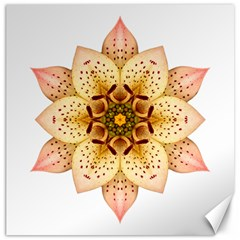 Asiatic Lily Ii Flower Mandala Canvas 12  X 12   by flowermandalas