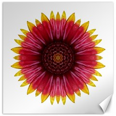 Galliardia Arizona Sun I Flower Mandala Canvas 16  X 16   by flowermandalas