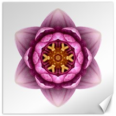 Water Lily X Flower Mandala Canvas 20  X 20   by flowermandalas