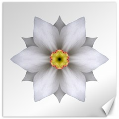 White Daffodil Ii Flower Mandala Canvas 12  X 12   by flowermandalas