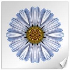 White Daisy I Flower Mandala Canvas 20  X 20   by flowermandalas
