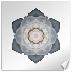 White Rose I Flower Mandala Canvas 12  X 12   by flowermandalas