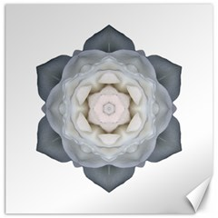 White Rose I Flower Mandala Canvas 20  X 20   by flowermandalas