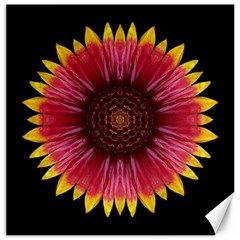 Galliardia Arizona Sun I Flower Mandala Canvas 12  X 12   by flowermandalas