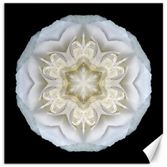 White Begonia Ii Flower Mandala Canvas 12  X 12   by flowermandalas