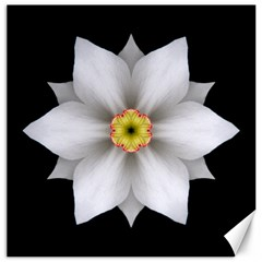 White Daffodil Ii Flower Mandala Canvas 20  X 20   by flowermandalas