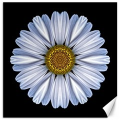 White Daisy I Flower Mandala Canvas 12  X 12   by flowermandalas