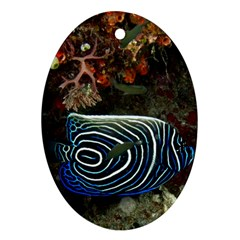Angelfish 2 Ornament (oval) by trendistuff