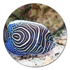 Angelfish 3 Magnet 5  (round) by trendistuff