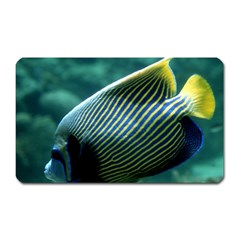 Angelfish 4 Magnet (rectangular) by trendistuff