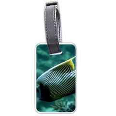 Angelfish 4 Luggage Tags (two Sides) by trendistuff