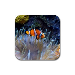Clownfish 2 Rubber Square Coaster (4 Pack)  by trendistuff