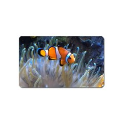 Clownfish 2 Magnet (name Card) by trendistuff