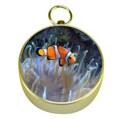 Clownfish 2 Gold Compasses by trendistuff