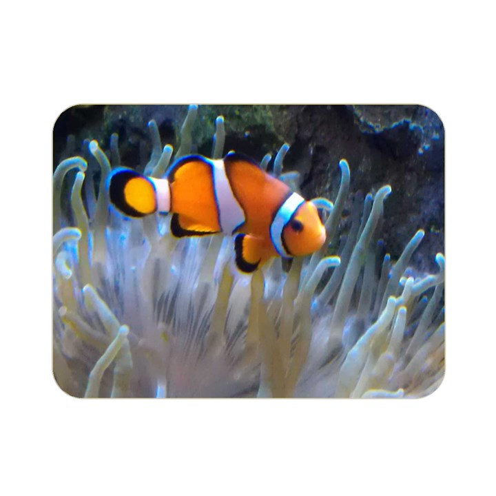 CLOWNFISH 2 Double Sided Flano Blanket (Mini)