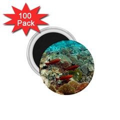 Coral Garden 1 1 75  Magnets (100 Pack)  by trendistuff