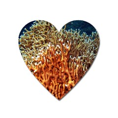 Fire Coral 1 Heart Magnet by trendistuff