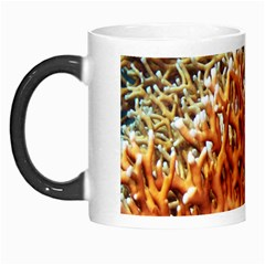 Fire Coral 1 Morph Mugs by trendistuff
