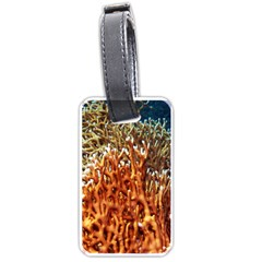 Fire Coral 1 Luggage Tags (two Sides) by trendistuff