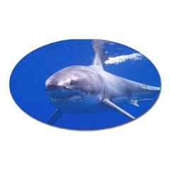 Great White Shark 4 Oval Magnet by trendistuff