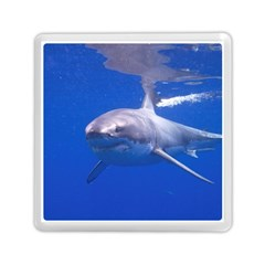 Great White Shark 4 Memory Card Reader (square)  by trendistuff