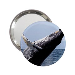 Humpback 2 2 25  Handbag Mirrors by trendistuff