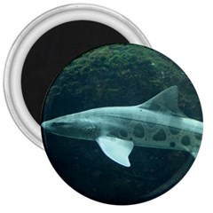 Leopard Shark 3  Magnets by trendistuff