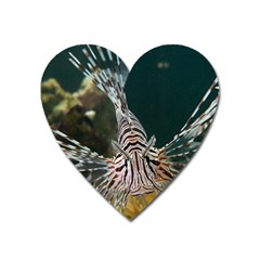 Lionfish 4 Heart Magnet by trendistuff