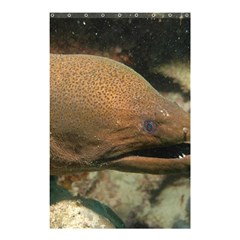 Moray Eel 1 Shower Curtain 48  X 72  (small)  by trendistuff