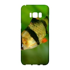 Tiger Barb Samsung Galaxy S8 Hardshell Case  by trendistuff