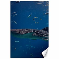Whale Shark 1 Canvas 24  X 36  by trendistuff