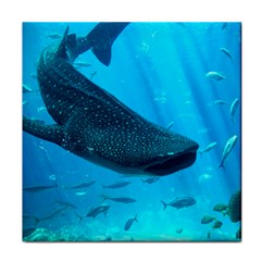 Whale Shark 2 Face Towel by trendistuff