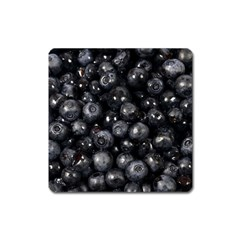 Blueberries 1 Square Magnet by trendistuff