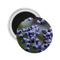 Blueberries 2 2 25  Magnets by trendistuff